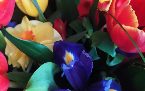 Курск занимает 15 место в рейтинге ажиотажа к 8 марта