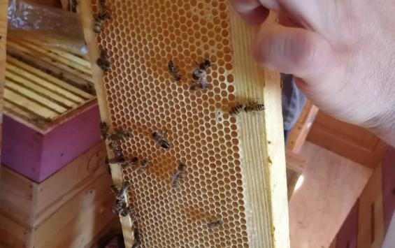 «Курск-Агро» заплатит за гибель пчел