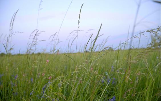 В Курске ожидается потепление до 21 градуса