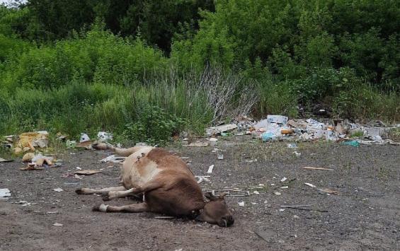 Во Льговском районе убрали несанкционированную свалку
