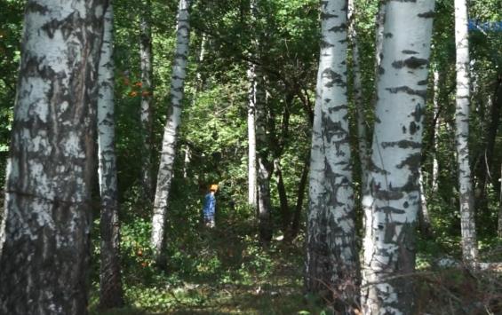 Экс-прокурор требует остановить вырубку леса