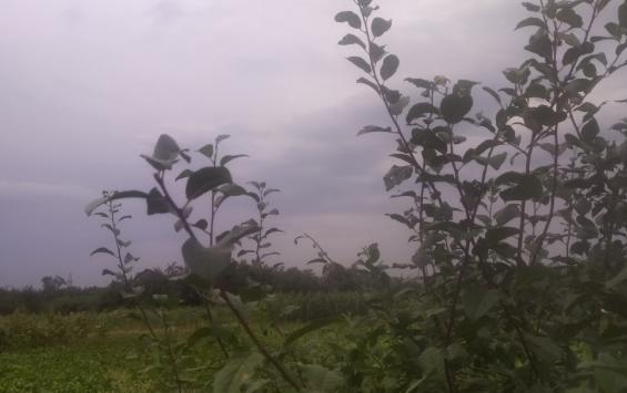 В Курской области ожидается туман
