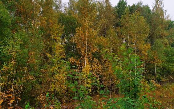 Житель Щигров незаконно пилил деревья